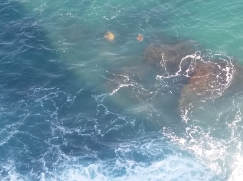 Tortoises chilling in the waves