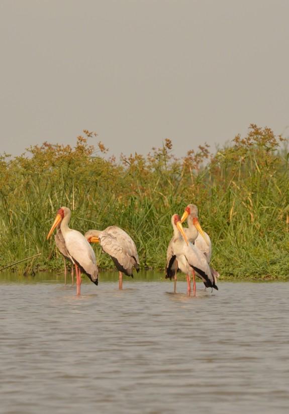 Storks (