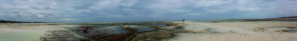 Seaweed farms